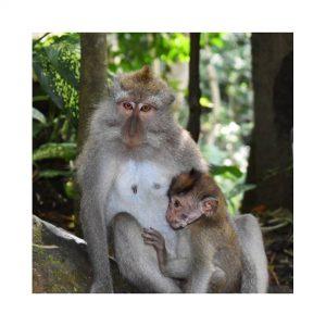 Monkey_Forest_Bali